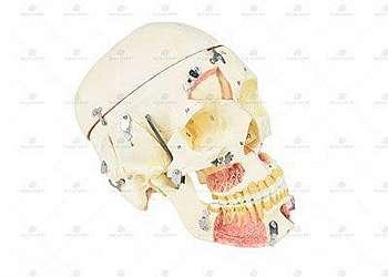 Fábrica de peças de anatomia em resina